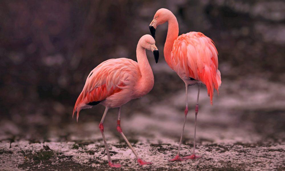 pink-flamingos-on-brown-soil-3881809